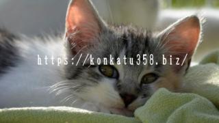 猫好き 婚活 大阪