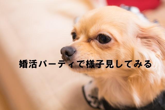 犬好き婚活パーティ東京