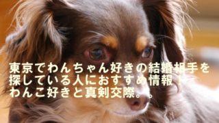 東京犬好き婚活