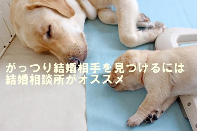 犬好き婚活東京